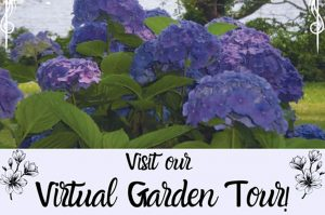 virtual-garden-tour-library