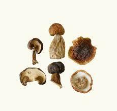 Mushroom Matches