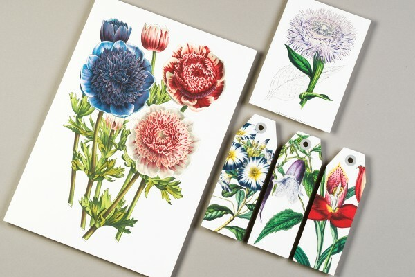 Pepin Paper Craft Book Flowers